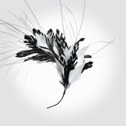Pene Couture 9961